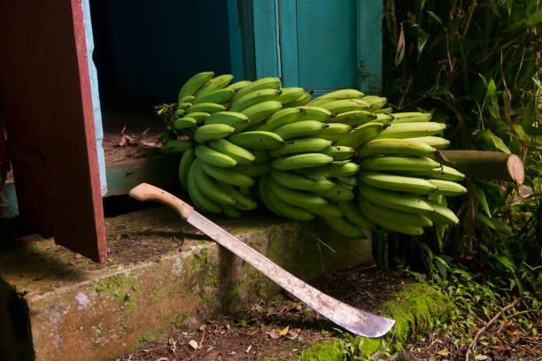 Entermesser und grüne Bananen – Foto