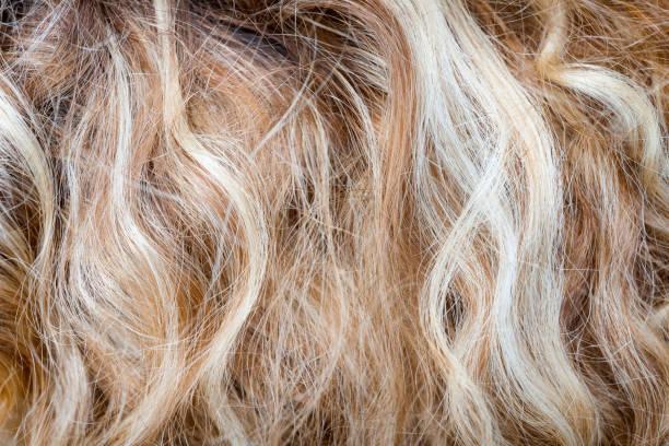 ausschnitt des blondes lockiges haar als textur hintergrund komposition - schichthaare stock-fotos und bilder