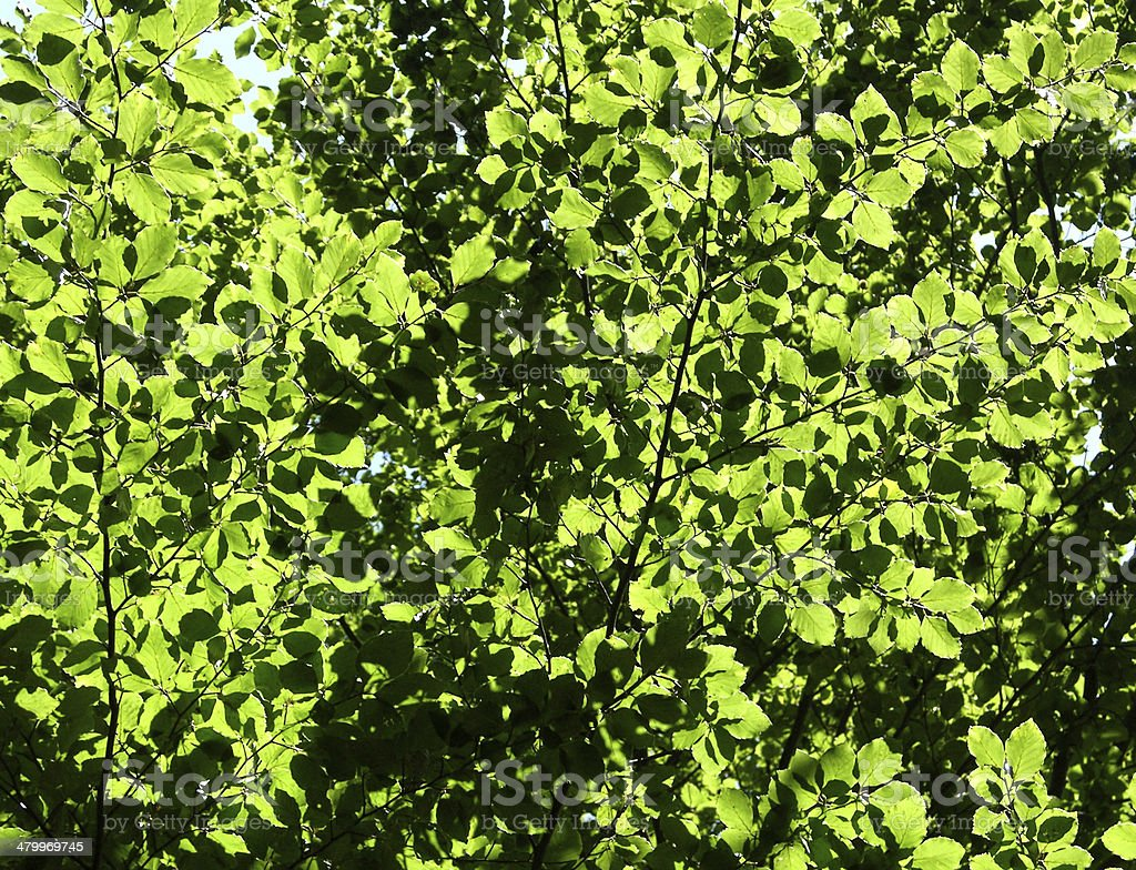 Cutout of leafy canopies as background picture stock photo