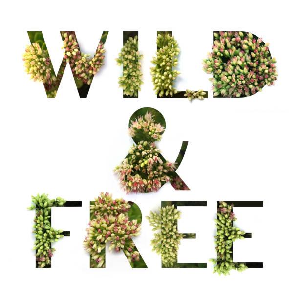 ausschnitt zitieren wild & free mit wachsende pflanze im inneren. plakat-konzept. - garden types stock-fotos und bilder