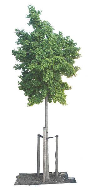 Cutout tree stock photo