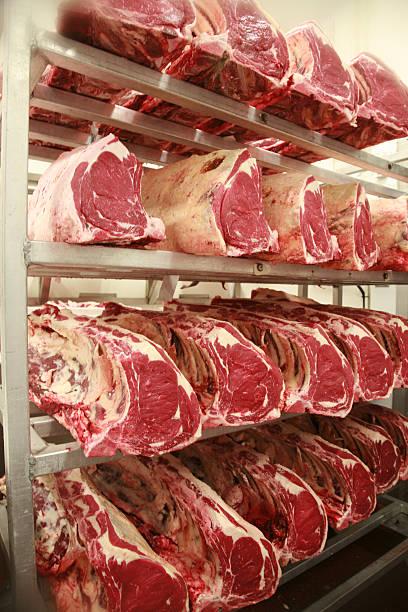 rindfleisch auf den regalen in einem landwirtschaftlichen betrieb zum schlachthof abgehangen - wie alt werden kühe stock-fotos und bilder