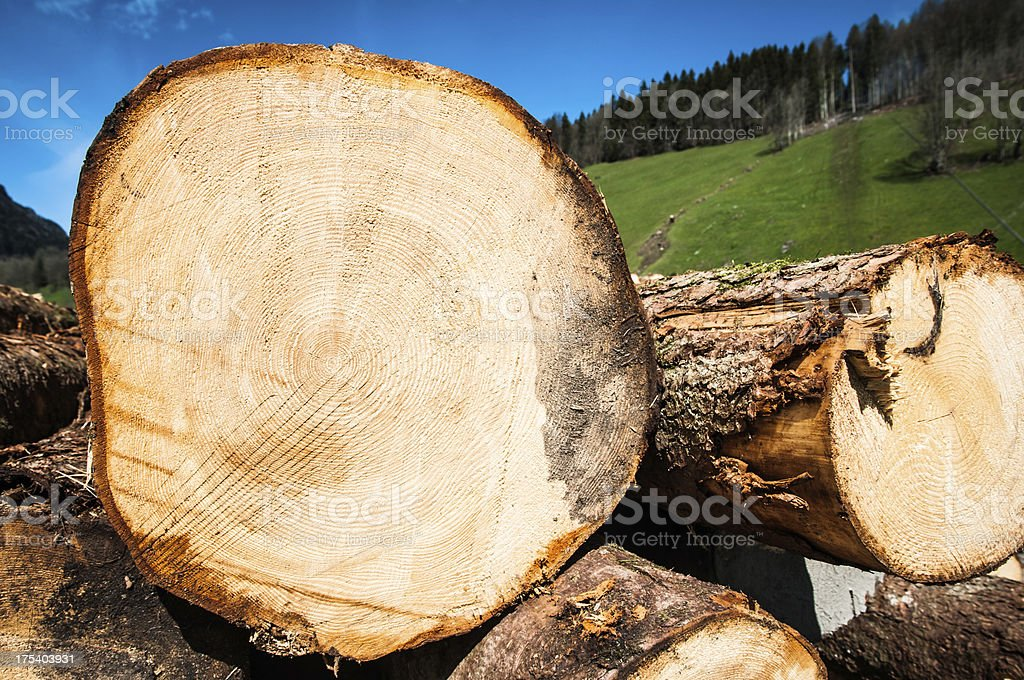 cutted tree trunk side view royalty-free stock photo