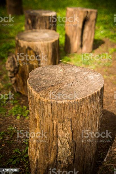Photo of Cutted trees