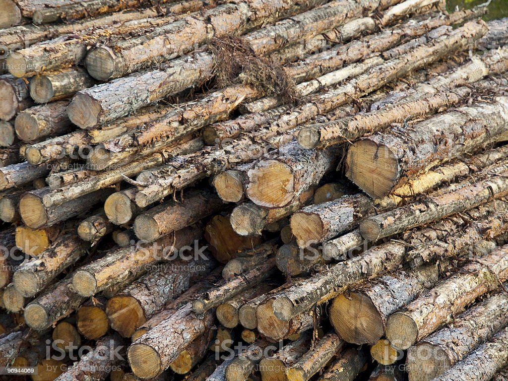 Cutted Trunks royalty-free stock photo