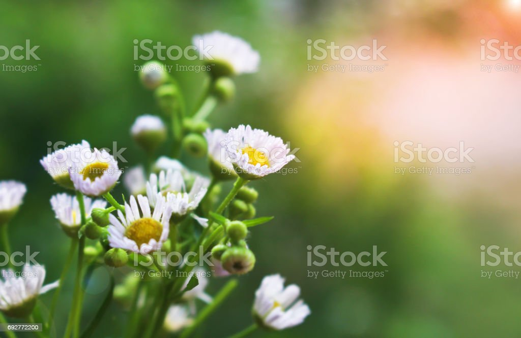 Cutter flower in garden soft focus. stock photo