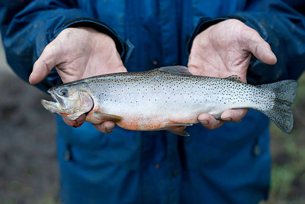 Cutthroat Trout Close-up A man holding a trout. cutthroat stock pictures, royalty-free photos & images