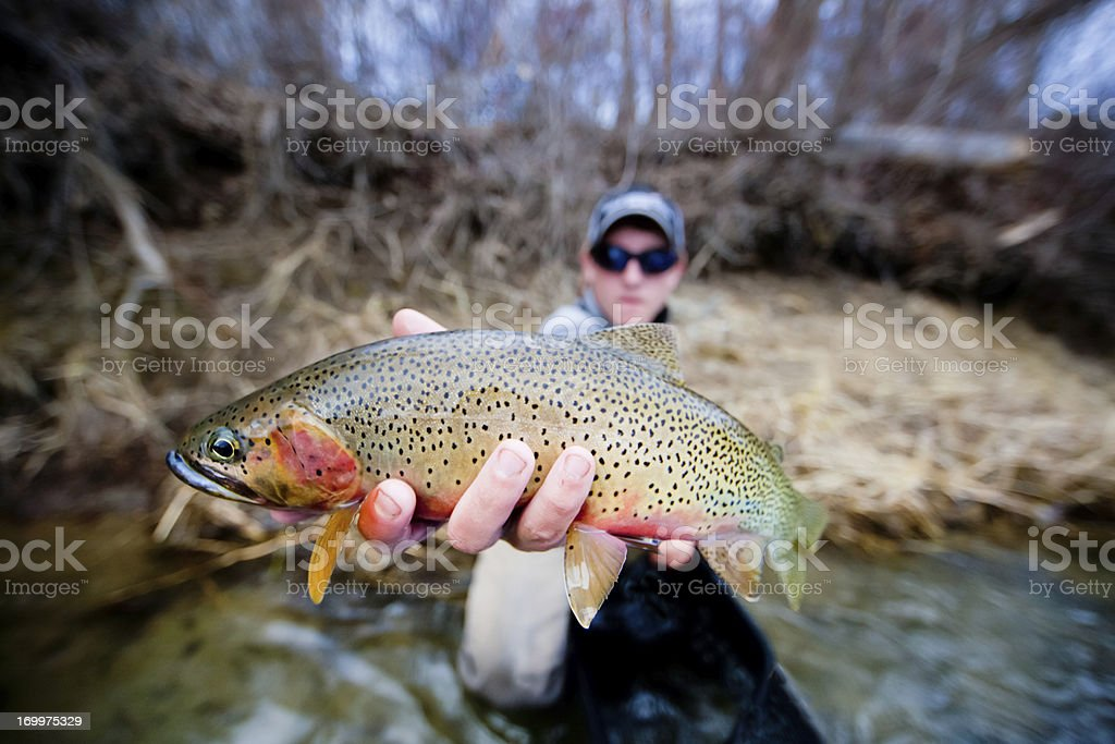 Cutthroat Trout Flyfishing stock photo
