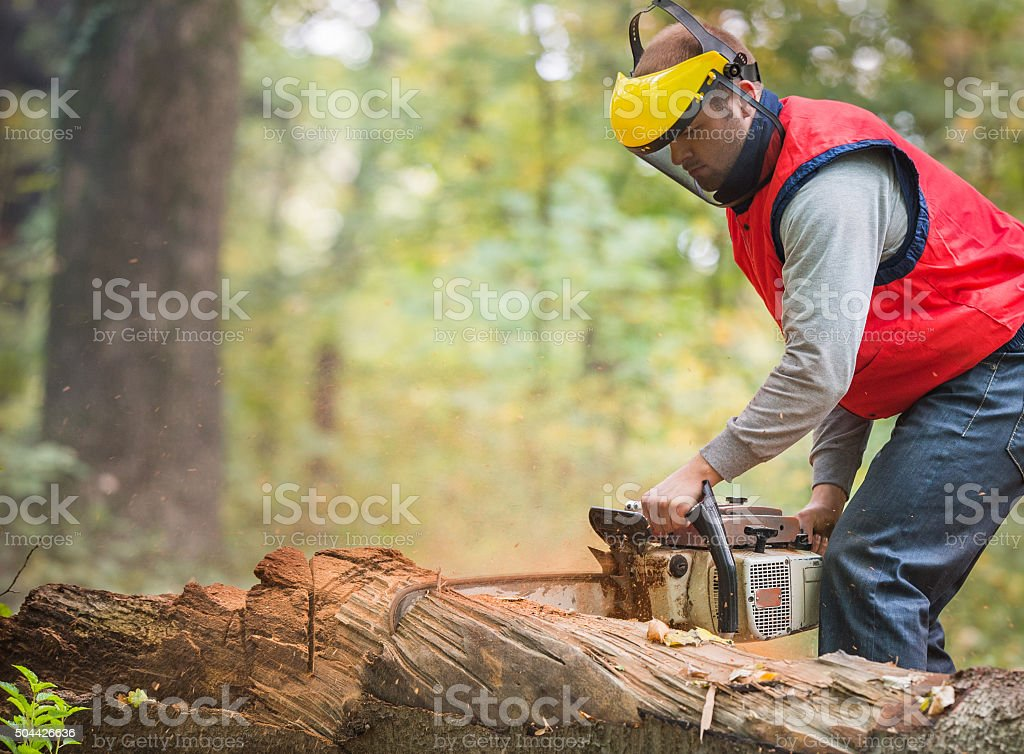 cutting a branch with chainsaw stock photo