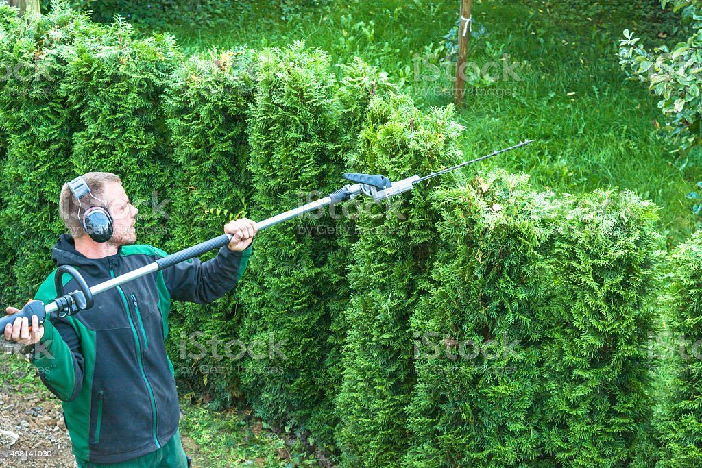 Cutting a hedge stock photo