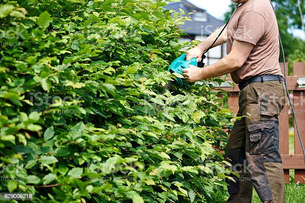 Photo of Cutting a hedge