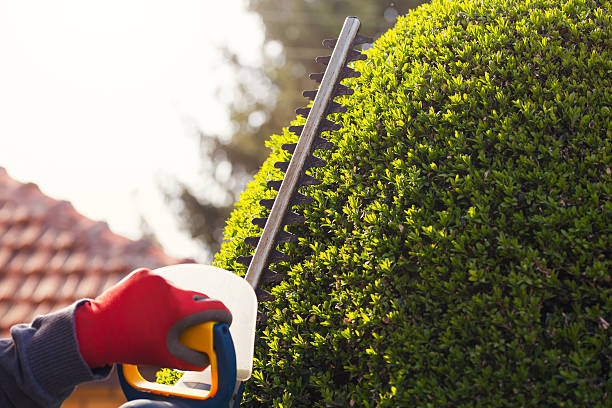 Image result for Lawn And Hedge  istock