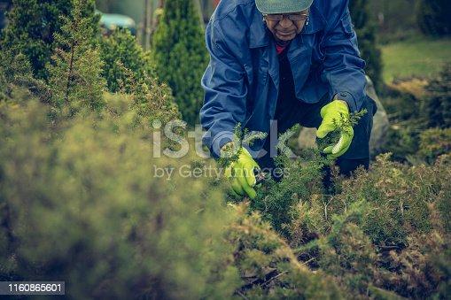 Senior Men cutting a plants