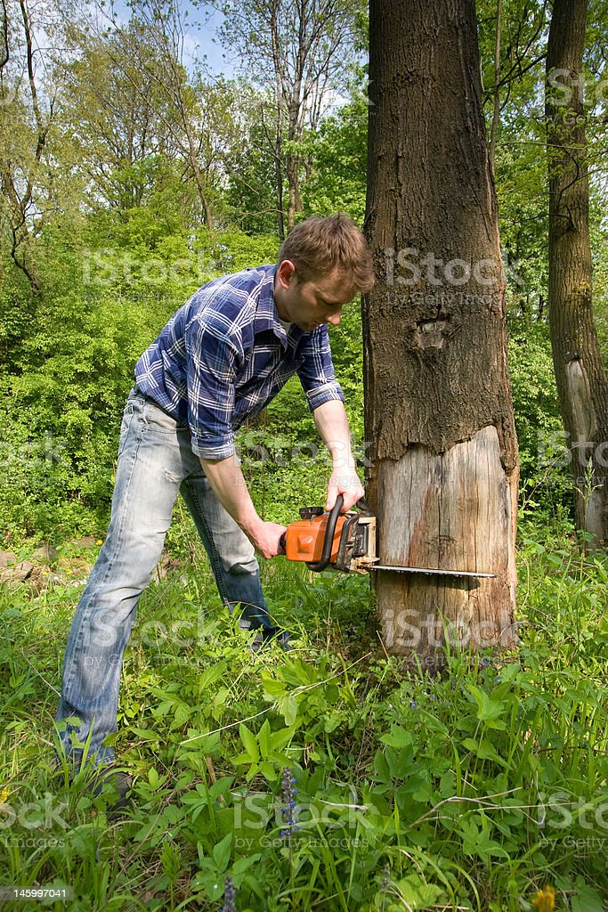 Cutting dead tree royalty-free stock photo