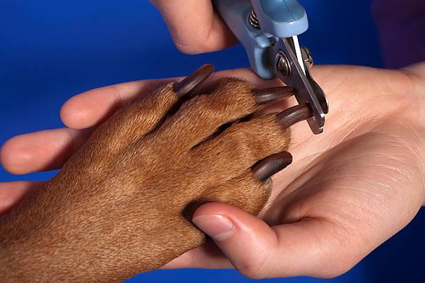 cutting dog nail stock photo