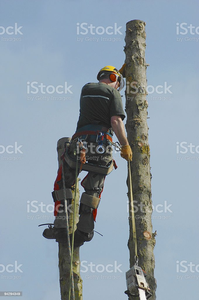 Cutting down a tree royalty-free stock photo