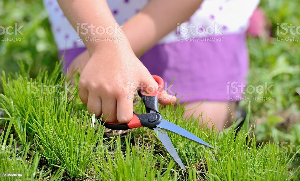 Cтоковое фото Режущие свежая трава с пара ножниц