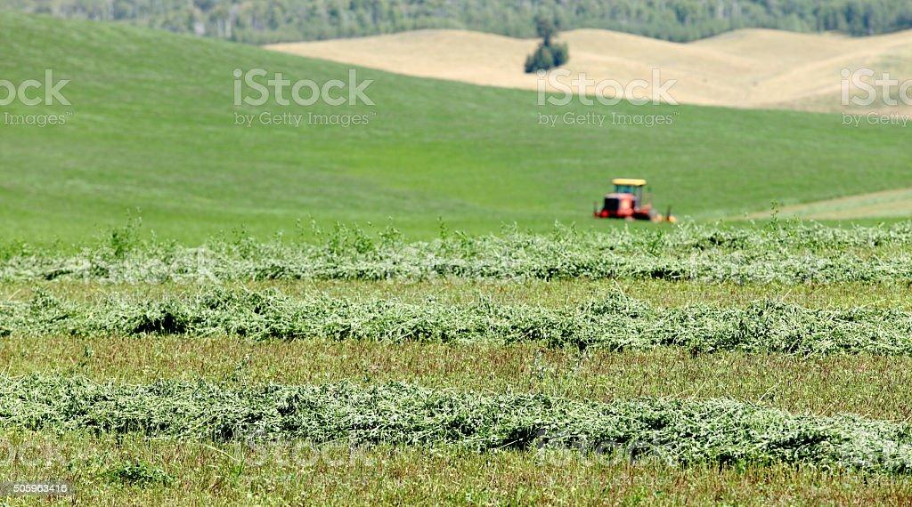 Cutting hay stock photo
