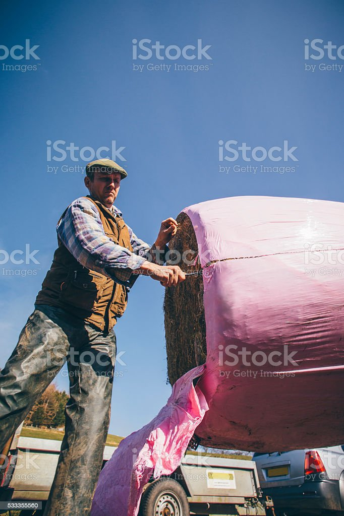 Cutting Open a Silage Bale stock photo