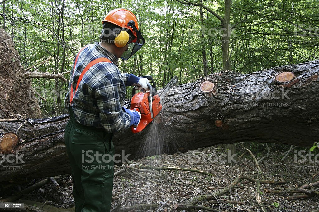 cutting the tree royalty-free stock photo
