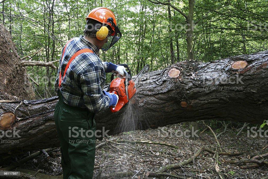 cutting the tree stock photo
