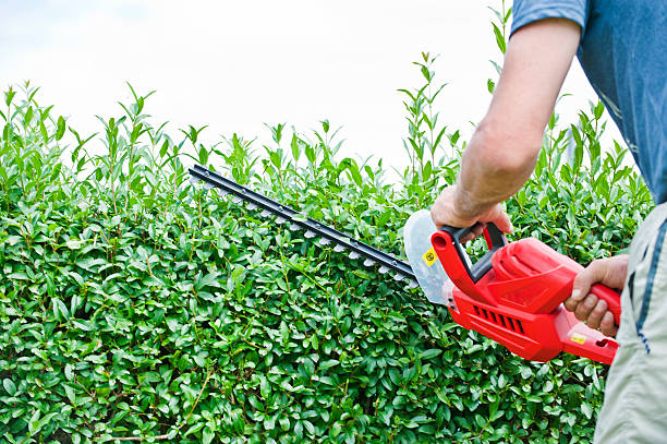 Cutting the trees Man trimming hedge using  strimmer hedge clippers stock pictures, royalty-free photos & images