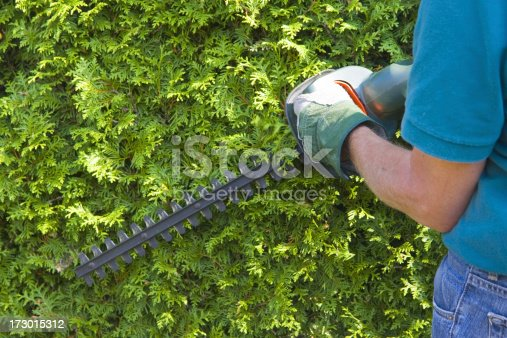 istock Cutting the trees # 4 XL 173015312