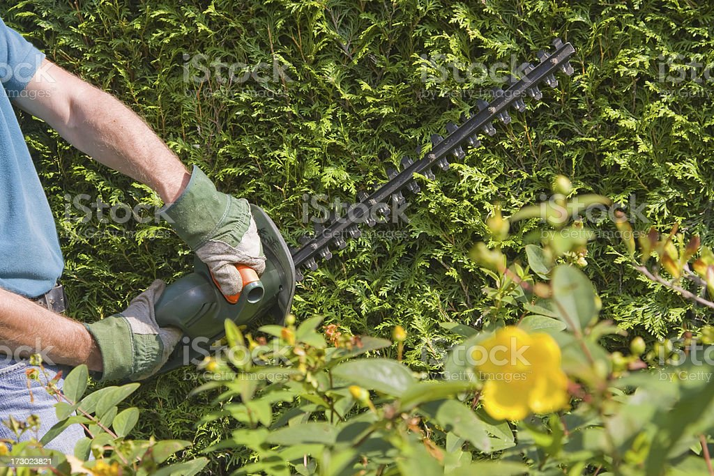 Cutting the trees # 5 XL royalty-free stock photo