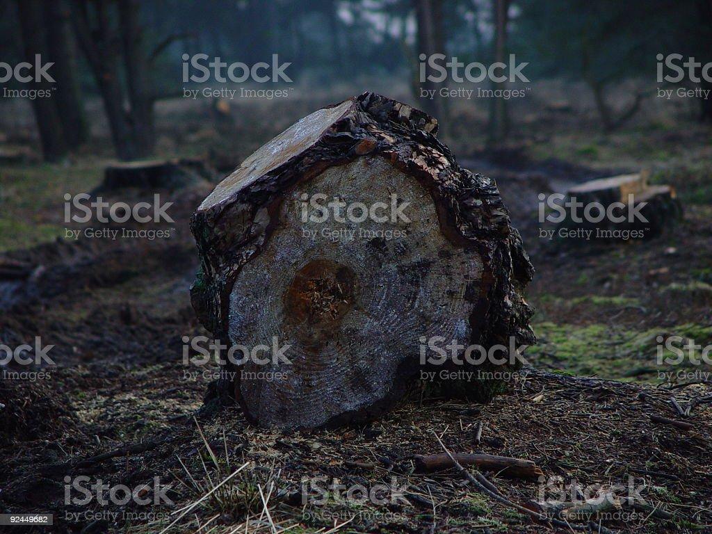 Cutting Trees stock photo