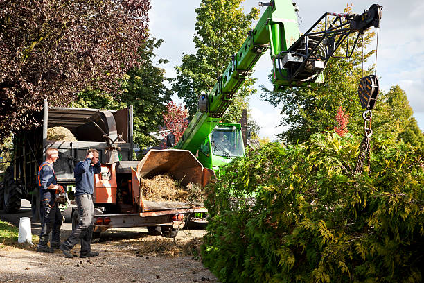 schneiden bäumen # 13 xl - häcksler stock-fotos und bilder