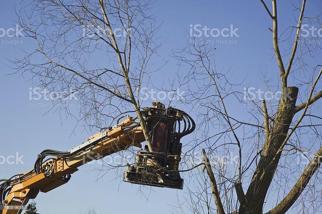 Cutting trees # 9 XXXL stock photo