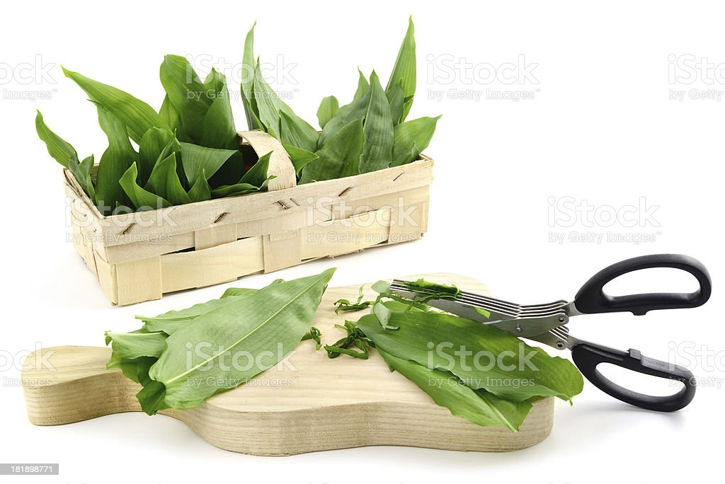 cutting with herb scissors leaves of wild garlic (Allium ursinum) stock photo
