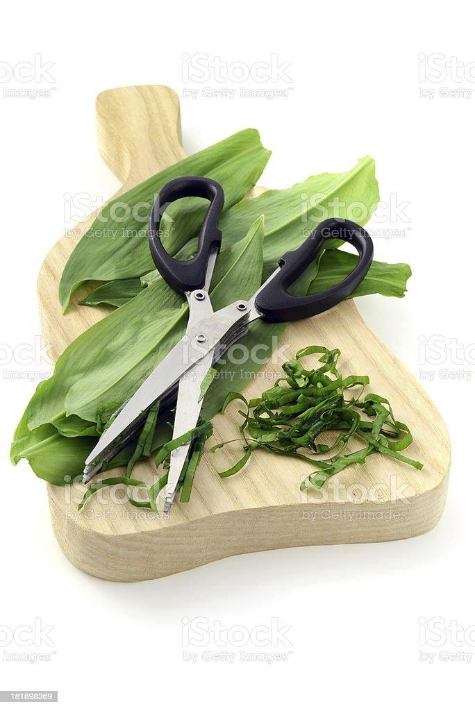 cutting with herb scissors wild garlic (Allium ursinum) stock photo