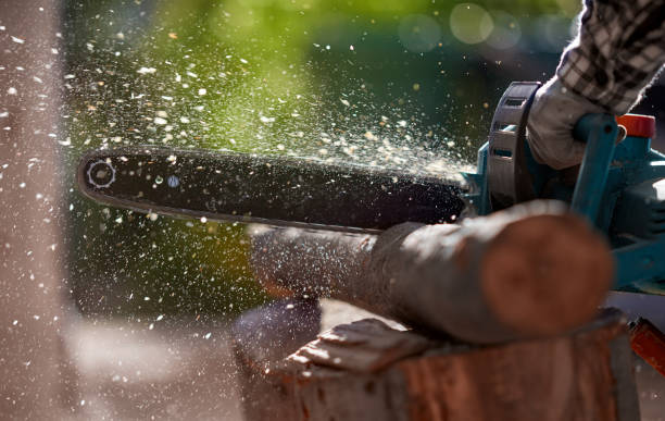 cuttings logs with chainsaw - chainsaw stock photos and pictures