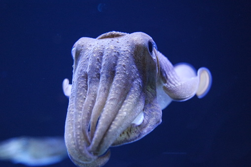 Cuttlefish Macro Stock Photo - Download Image Now