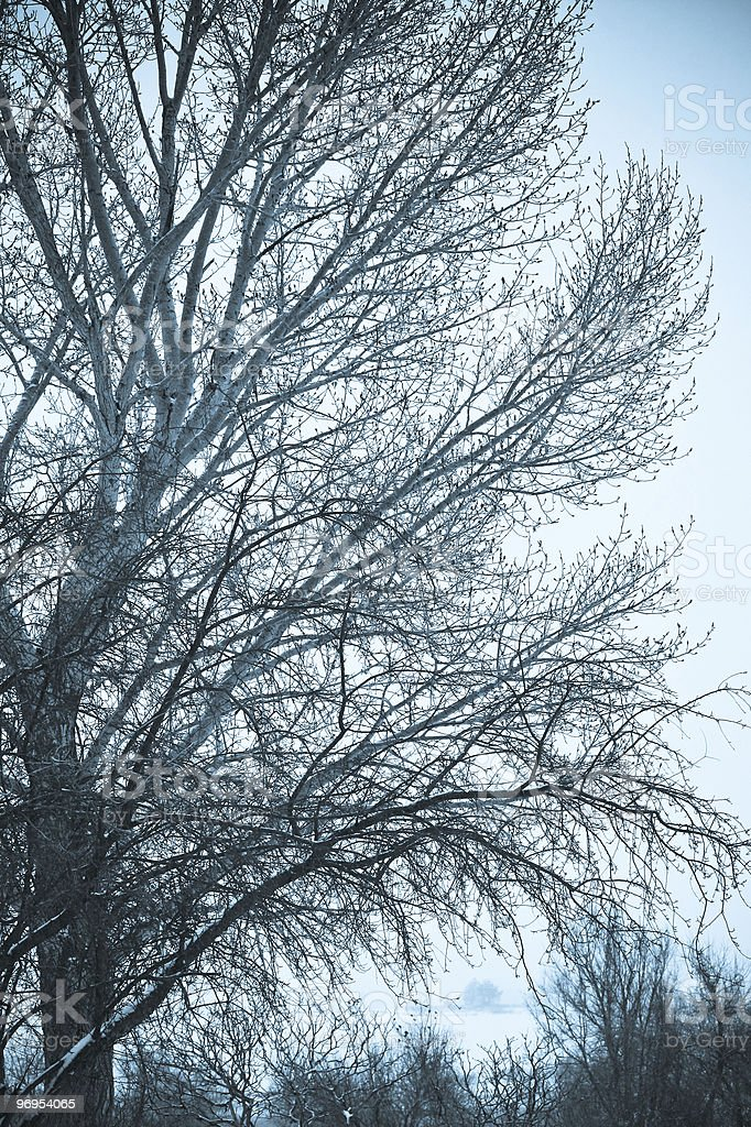 Cyan Tree royalty-free stock photo