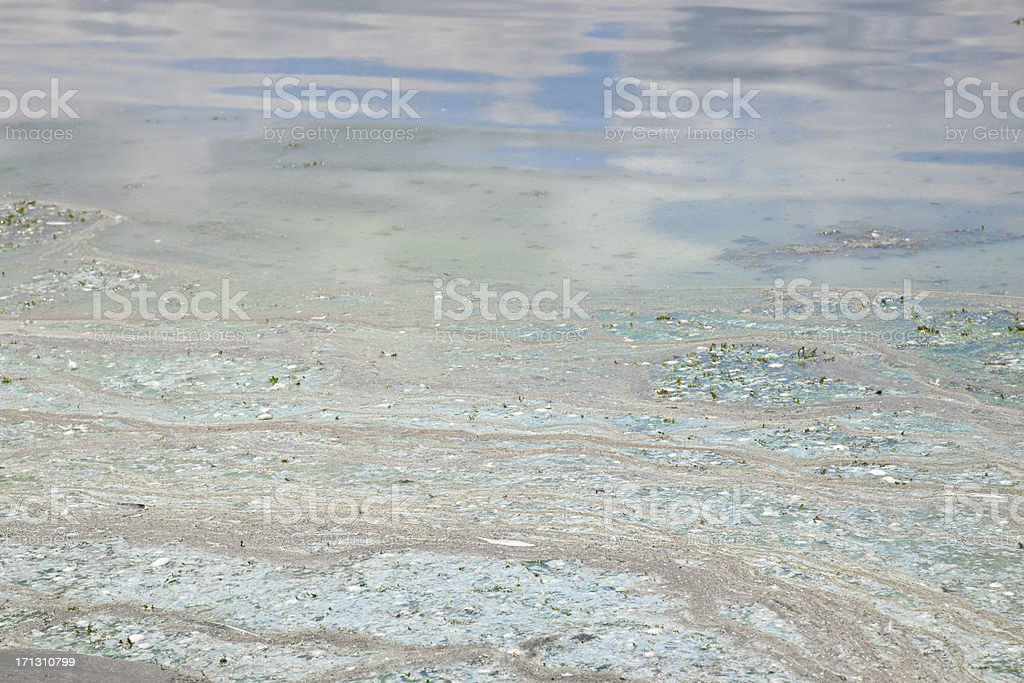Cyanobakteria stock photo