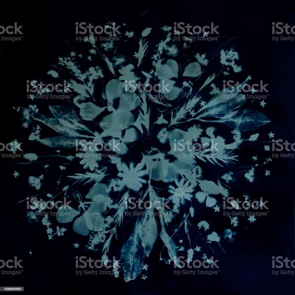 Cyanotype of Herbs, Leaves, Petals, Flowers as Tussie Mussie Bouquet stock photo