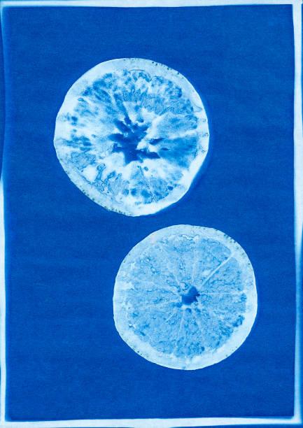 cyanotype of orange slices stock photo