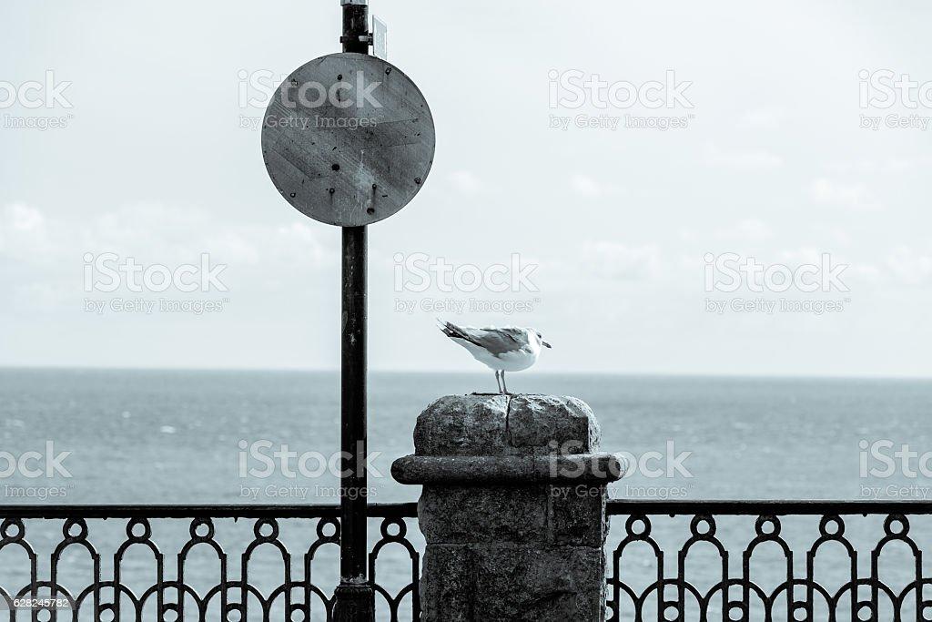 Cyanotype Seagul on a coastal wall stock photo