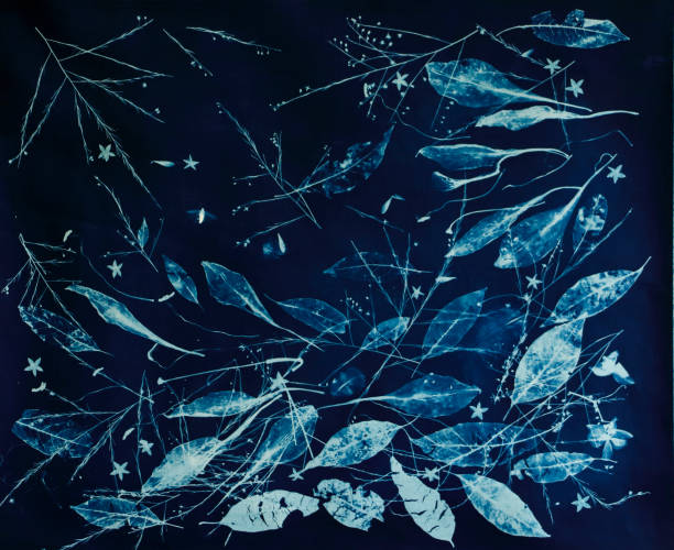 Cyanotype Sun Print Photograph of Leaves, Feathers, Flowers and Fern stock photo
