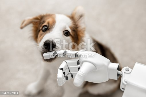 1042827770istockphoto cyborg or robot hand is holding his finger to a puppy, sitting on the floor. concept cybernetic or robotic 947127914