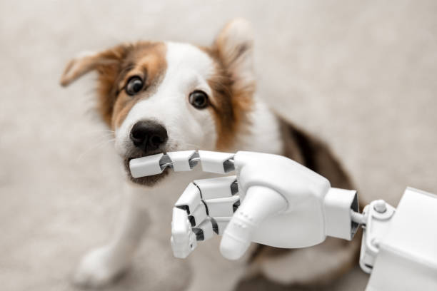 Best Robot Dog Stock Photos, Pictures & Royalty-Free Images