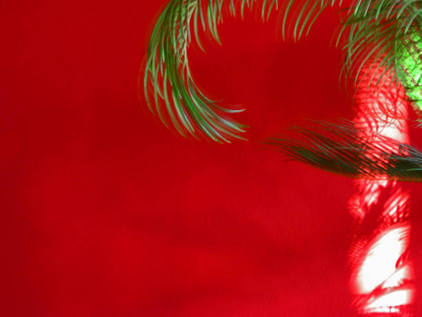 Cycad frond and shadow against a red wall stock photo