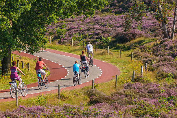 Cycling tourists in Dutch national park Veluwezoom stock photo