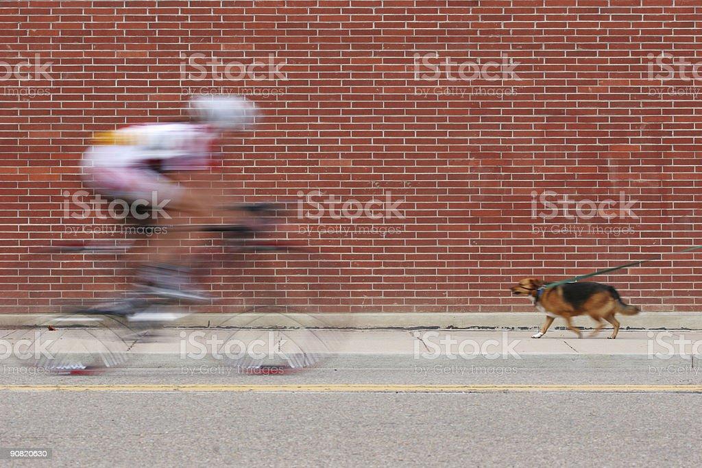 Cyclist & Dog On Brick stock photo