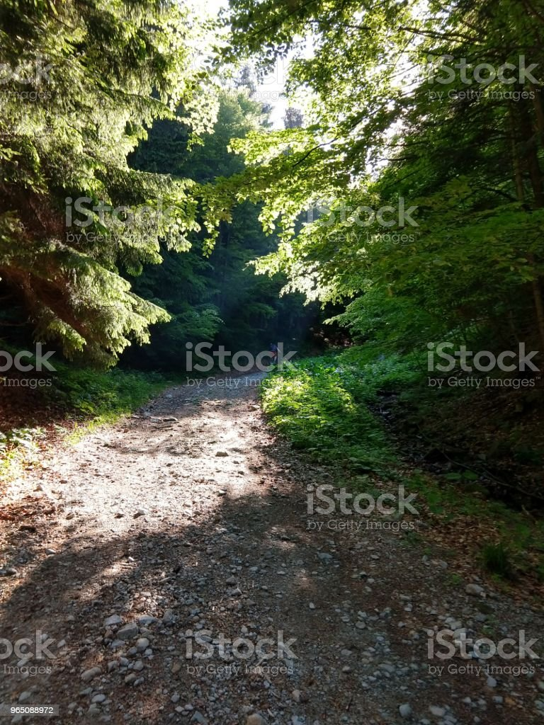 Cyclist in the forest. royalty-free stock photo