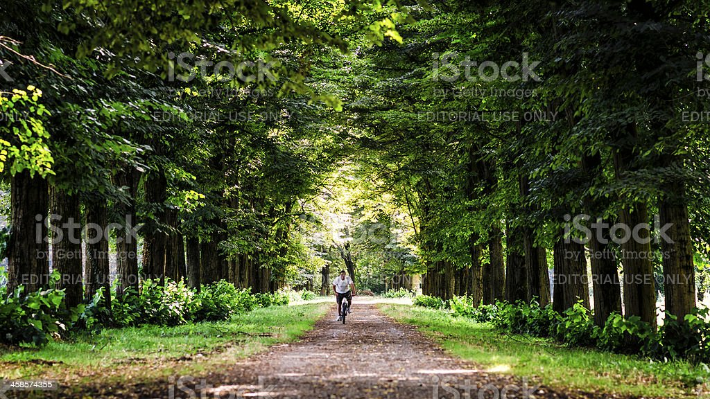 cyclist in the park of Monza sorrounded by trees stock photo