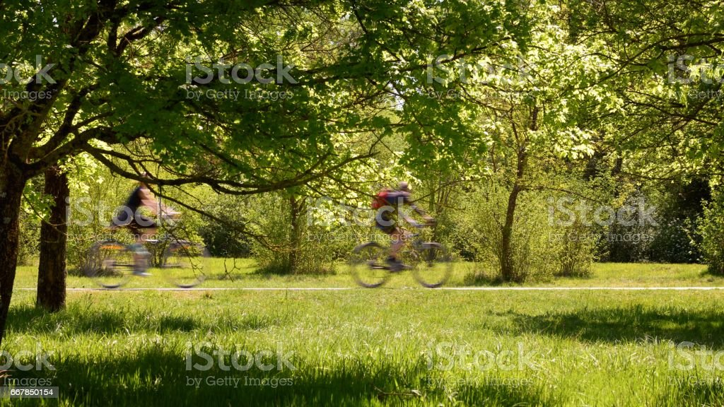 Cyclists gallop in the woods – Foto