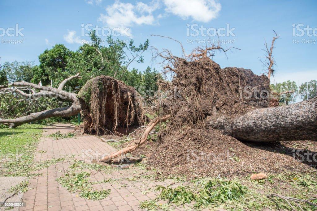 Cyclone Marcus Devastation stock photo
